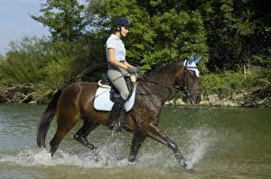 Images Equestrian sport  Horses Water Water splash athletic Girls