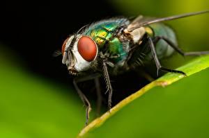 Papel de Parede Desktop moscas Macro De perto animalia