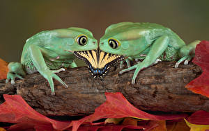 Image Frog Butterflies Two Animals