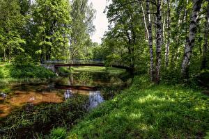 Fotos Russland Sankt Petersburg Parks Teich Brücken Bäume Birken Nevsky Forest Park