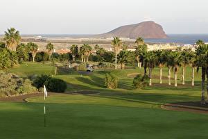 Hintergrundbilder Spanien Tropen Acker Golf Kanarische Inseln Rasen Palmengewächse Tenerife Natur