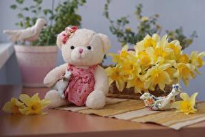 Hintergrundbilder Teddybär Narzissen Blumen