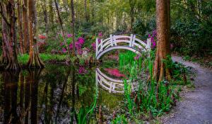 Bilder Vereinigte Staaten Park Teich Brücken Magnolien Bäume South Carolina Magnolia park Natur