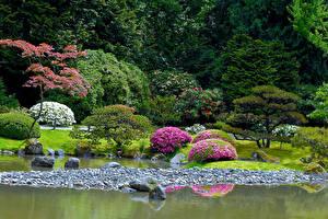 Fotos Vereinigte Staaten Seattle Parks Teich Steine Design Strauch Seattle Japanese Garden Natur