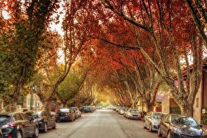 Fondos de escritorio Australia Melbourne Carreteras Calle árboles