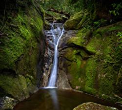 Bilder Australien Parks Wasserfall Felsen Laubmoose Bäche Paluma National Park Queensland Natur