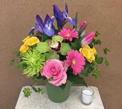 Bilder Sträuße Gerbera Orchideen Schwertlilien Rose Blumen