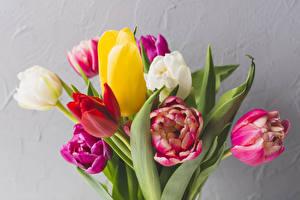 Fotos Sträuße Tulpen Hautnah Grauer Hintergrund Blumen