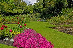 Bakgrunnsbilder Canada Hage Rosa Nelliker Vancouver Plen Busker Queen Elizabeth Garden Natur