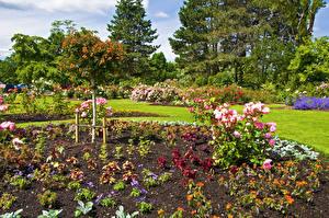 Bakgrunnsbilder Canada Hage Roser Vancouver Busker Queen Elizabeth Garden Natur