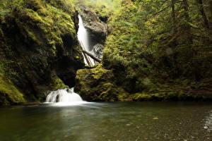 Hintergrundbilder Kanada Wasserfall Vancouver Felsen Laubmoose Nile Creek Falls Natur