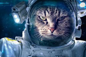 Bureaubladachtergronden Katten Ruimtevaarder Grappige Dieren