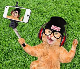 Pictures Cat Grass Ginger color Winter hat Glasses Headphones Smartphones Selfie Funny animal
