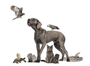 Fotos Hund Vogel Papageien Kaninchen Hauskatze Schildkröten Hausmeerschweinchen Schlangen Weißer hintergrund Welpen Graue ein Tier