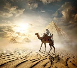 Bilder Ägypten Wüste Altweltkamele Pyramide bauwerk Cairo