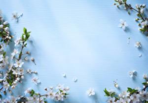 Bilder Blühende Bäume Farbigen hintergrund Ast Blumen