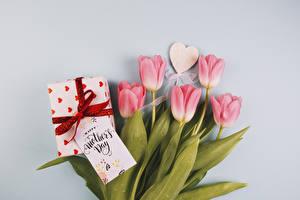 Papéis de parede Feriados Tulipas Fundo cinza Cor-de-rosa Coração Presentes Flores