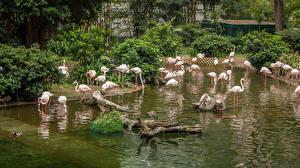 Bilder Hongkong Parks Teich Flamingos Kowloon Park