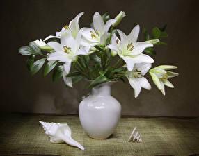 Fotos Lilien Vase Weiß Blumen