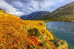 Fotos Norwegen Berg See Herbst Gras Natur