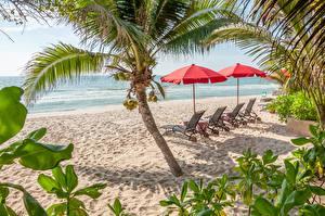Bilder Palmen Strand Sand Sonnenliege Natur