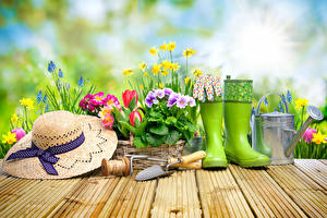 Pictures Primula Narcissus Hyacinths Spring Boards Hat Wearing boots