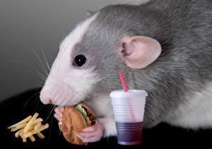 Hintergrundbilder Nagetiere Mäuse Hamburger Fritten Fast food Trinkglas Schnauze ein Tier