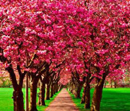 Sfondi desktop La primavera Alberi in fiore Avenue