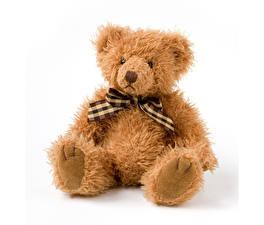 Bilder Teddybär Weißer hintergrund Sitzend Schleife