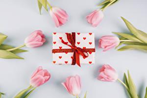 Fotos Tulpen Farbigen hintergrund Rosa Farbe Geschenke Schleife Blumen