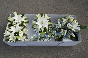 Hintergrundbilder Blumensträuße Lilien Weiß Blüte
