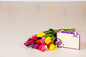 Hintergrundbilder Sträuße Tulpen Farbigen hintergrund Vorlage Grußkarte Blüte