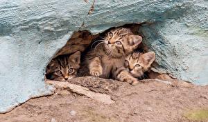Wallpaper Cats Cave Kitty cat Three 3 Staring animal