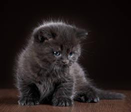 Bilder Katze Kätzchen Graues Tiere