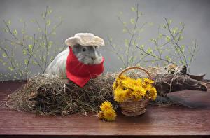 Bilder Löwenzahn Hausmeerschweinchen Weidenkorb Ast Der Hut ein Tier