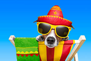 Picture Dogs Colored background Jack Russell terrier Eyeglasses Hat Snout Funny