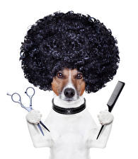 Pictures Dogs Creative White background Jack Russell terrier Hair