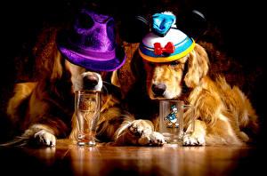 Bilder Hunde Golden Retriever 2 Der Hut Trinkglas Tiere