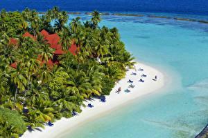 Fotos Malediven Tropen Resort Strände Palmengewächse Kurumba Natur