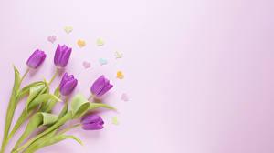 Bilder Tulpen Farbigen hintergrund Herz Blüte