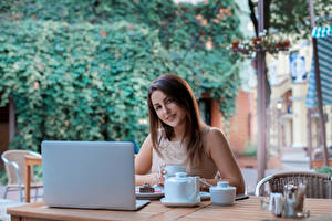 Picture Brown haired Staring Laptops Cup Cafe female