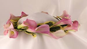 Fotos Drachenwurz Rosa Farbe