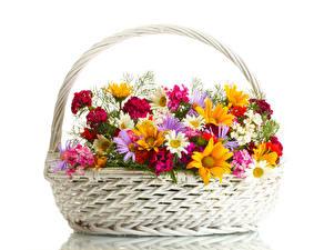 Papel de Parede Desktop Matricaria Dianthus Fundo branco Cesta de vime flor