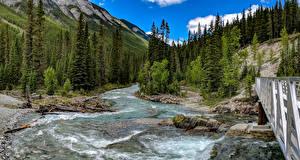 Hintergrundbilder Kanada Gebirge Wälder Flusse Park Brücken Landschaftsfotografie Banff Fichten Natur