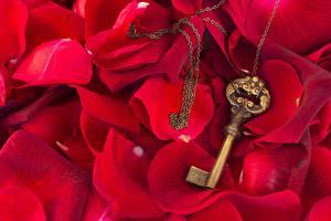 Hintergrundbilder Hautnah Rose Schlüssel Kronblätter