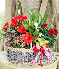 Fotos Georginen Buntnesseln Orchideen Inkalilien Weidenkorb Blumen