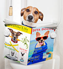 Photo Dogs Creative Toilet Jack Russell terrier Magazine Funny Animals