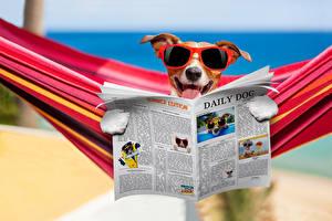Wallpapers Dogs Jack Russell terrier Eyeglasses Newspaper Funny Hammock