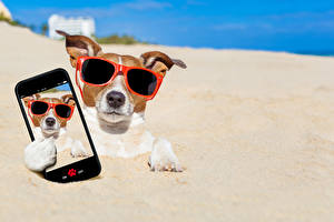 Pictures Dog Sand Jack Russell terrier Glasses Smartphone Selfie Funny Animals