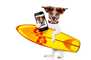 Wallpapers Dogs Surfing White background Jack Russell terrier Glasses Smartphone Selfie
